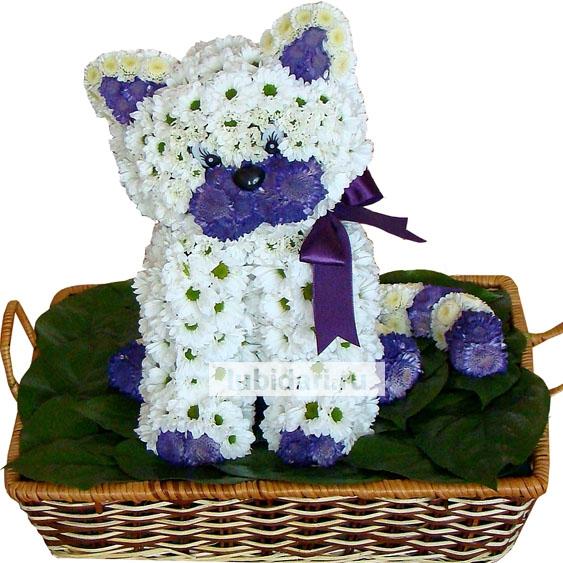 Кот из живых цветов своими руками 5
