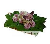 Котенок розовые пятнышки из цветов
