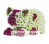 Кошечка из цветов