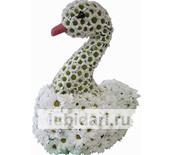 Лебедь белокурый из цветов